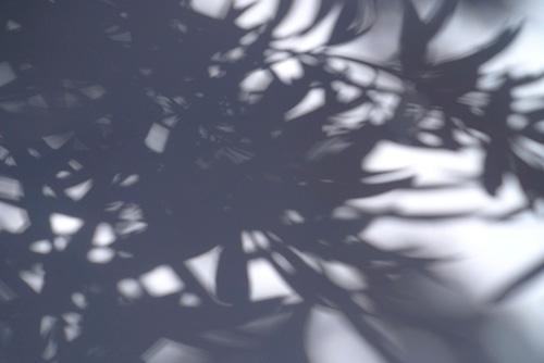Shadow.pic.500